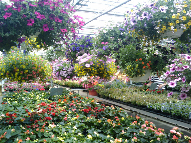 spring-flowers-greenhouse-2